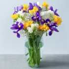 Freesias by post