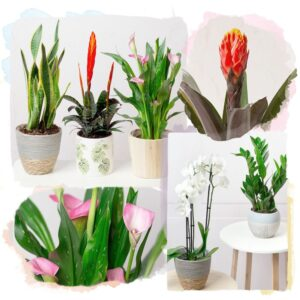 House Plant Monthly Gift